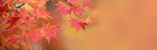 Happy Fall Autumn Season For Banner Background.
