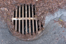 Manhole Surrounded By Leaves