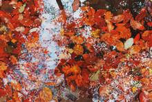 Autumn Orange Leaves On The Gr...