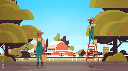 Valokuva  farmers couple picking ripe apples from tree african american man woman gatherin