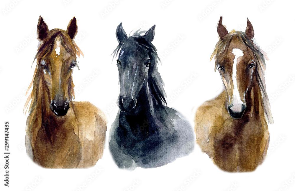 Fototapeta Cute watercolor horses on the white background