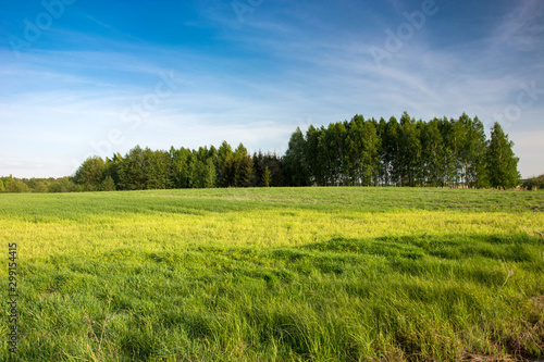Beautiful green meadow in eastern Poland and clouds on blue sky