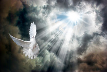 Flying White Dove In Front Of Stormy Sky