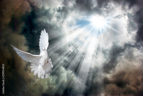 Flying white dove in front of stormy sky Canvas-taulu