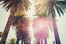 Palm Trees And Sky - Palm Tree...