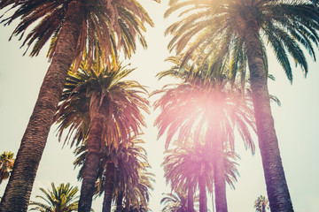 palm trees and sky - palm tree alley way -