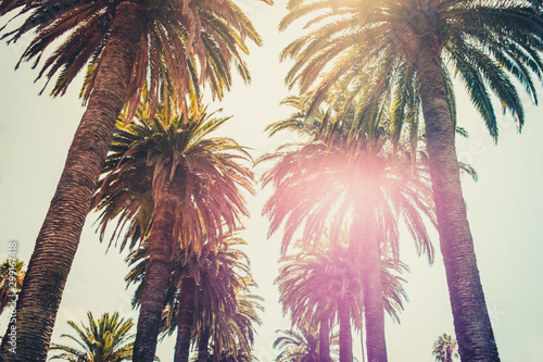 Poster Palmier palm trees and sky - palm tree alley way -