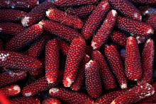 Pocket Red Corn