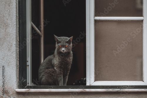 A brave ashen mustachioed cat with a stern look is sitting in the window opening Canvas Print