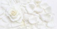 Beautiful White Rose And Petal...