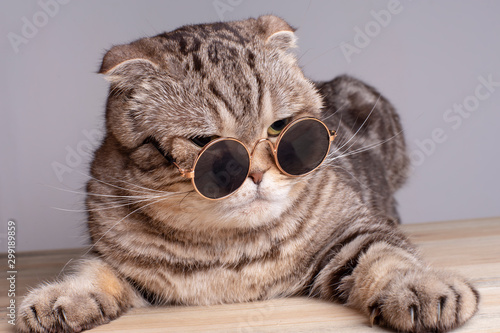 Serious cat (Scottish Fold) sternly looks through round sunglasses, lying on a wooden table Fotobehang