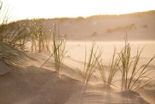 Sand And Grass Of The Curonian...