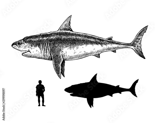 Comparison between humans, white shark and megalodon Canvas Print