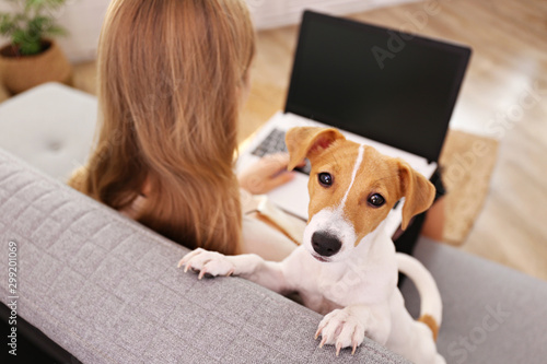 Obraz Close up shot of young woman working remotely from home on laptop, sitting on the couch in living room with her jack russell terrier puppy. Lofty interior design. Copy space, background, - fototapety do salonu