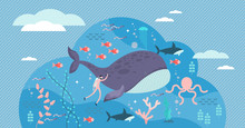 Marine Life Vector Illustratio...