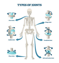 Types Of Joints Vector Illustr...