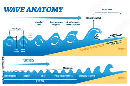 Canvas-taulu Wave anatomy vector illustration