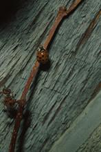 Multicolored Lady Beetle (Harmonia Axyridis)