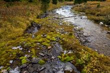 Mousse Dans Un Ruisseau En Montagne