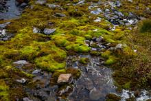 Mousse Sur De La Pierre Dans Un Ruisseau