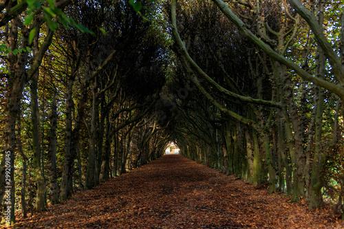 Spoed Fotobehang Weg in bos Une arche d'arbre en automne