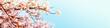 Leinwanddruck Bild - 美しく満開に咲き誇る一本の桜とコピースペースの青い空