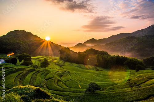 Fototapeta 千葉大山千枚田の美しい日の出 obraz