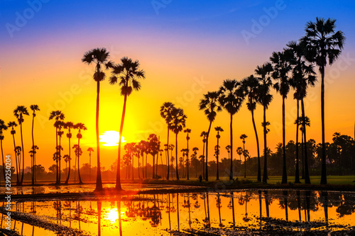 Montage in der Fensternische Honig Sugar palm trees on the paddy field in sunrise, Pathum Thani Province, Thailand