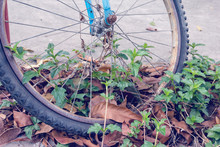 Closeup Old Bicycle Front Wheel