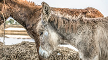 Poor An Innocent Brown Donkey Standing In The Fields And Looking So Tired Cause Of Heavy Work In The Fields Continuously