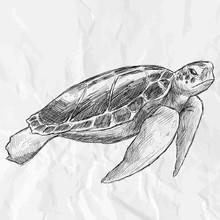 Sea Turtle. Hand Drawn Vector ...