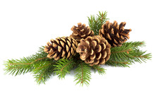 Pine Cones And Fir Tree Branch...