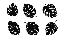 Set Of Black Silhouettes Of Tropical Leaves. Monstera