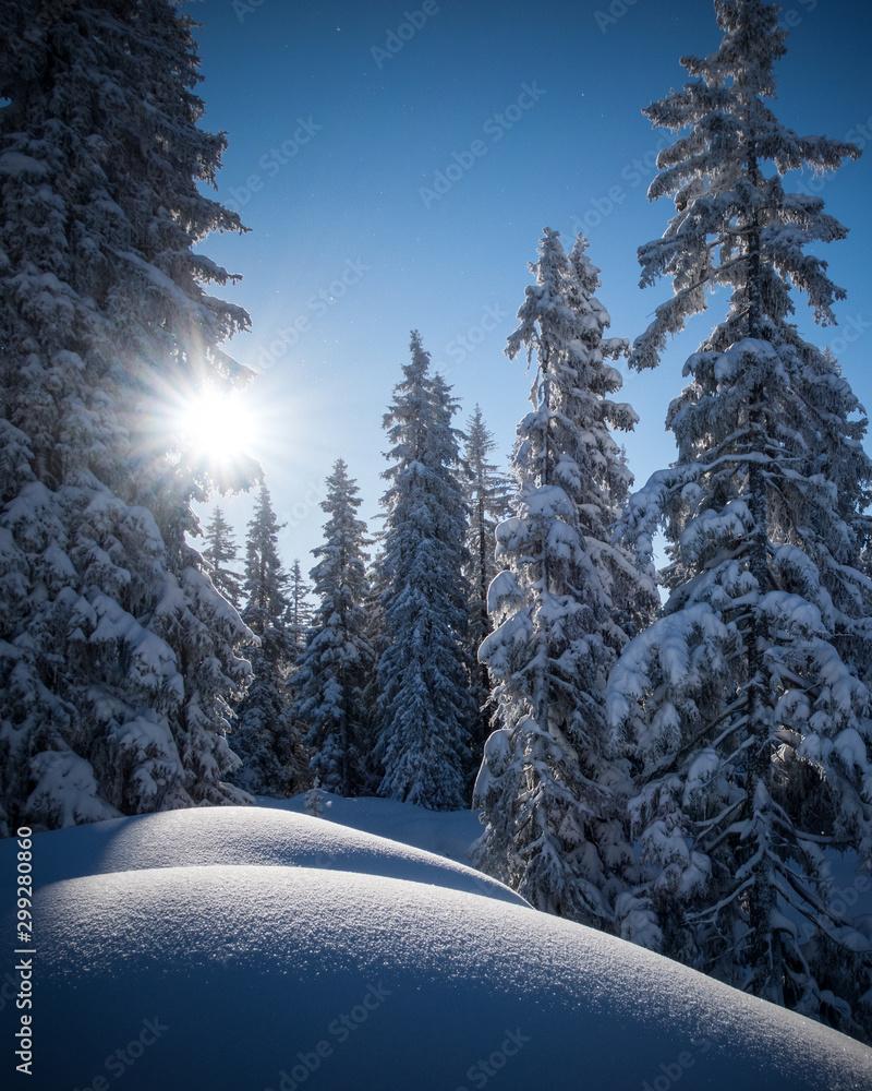 Fototapety, obrazy: Frisch verschneite Winterlandschaft in den Alpen (Vorarlberg, Österreich, Muttjöchle)