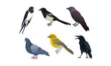 City Birds Vector Isolated On ...