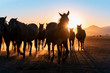 Herd of wild horses silhouette. Very curious and friendly. wild horse portrait