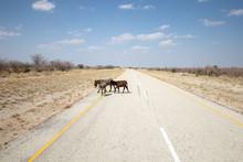 Donkeys Crossing A Deserted As...