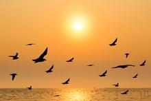 Seagull With Sunset At Bang Pu...
