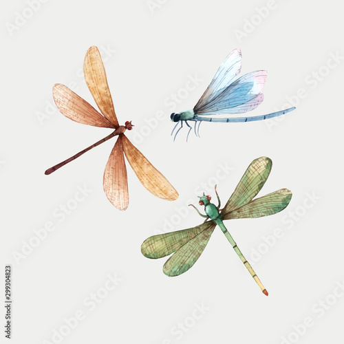 Canvastavla Watercolor vector summer dragonfly insect colourful illustrations set