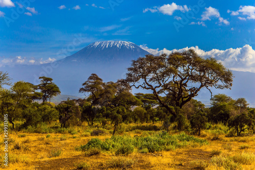 Canvas Print Amboseli is a biosphere reserve