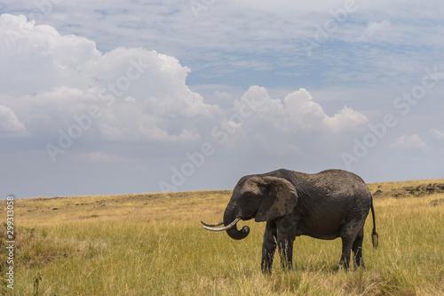 Canvas Prints Elephant Elephant Under Cloudy Skies