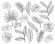 vector illustration of different tropical leaves hand drawn sketch cartoon style