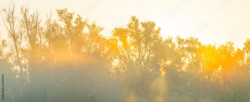 Fototapeta Trees in a pasture in sunlight at sunrise in autumn