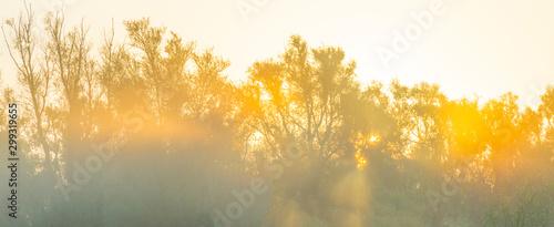 Obraz Trees in a pasture in sunlight at sunrise in autumn - fototapety do salonu