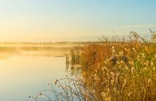 Reed Along The Edge Of A Lake ...