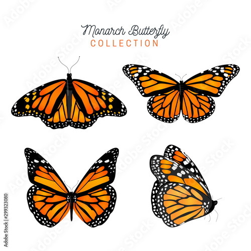 Vászonkép Butterfly collection vector animals natural.Vector