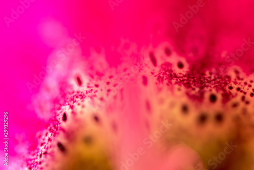 Photo pink with red petal in large approximation for background