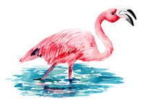 Flamingo In Water On An Isolated White Background, Watercolor Illustration