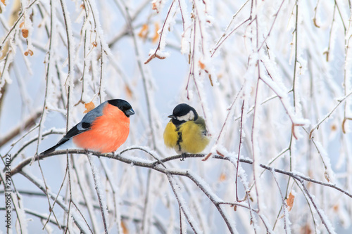 Obraz na plátně two birds titmouse and bullfinch are sitting on a branch nearby in the winter ho