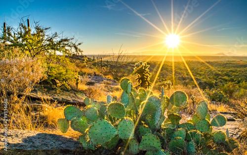 Fotografía  Sonoran Desert Cactus on Hill at Sunset - Saguaro National Park, Arizona, USA